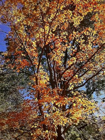 Low Angle View Nature Tree Beauty In Nature Growth Full Frame Day Backgrounds Branch Outdoors No People Tranquility Sky Scenics Close-up EyeEmNewHere Eye Em Nature Lover Lost In The Landscape 100 Shades Of Yellow Beauty In Nature Autumn Collection 2017 EyeEm Selects Autumn In Indiana Shades Of Winter