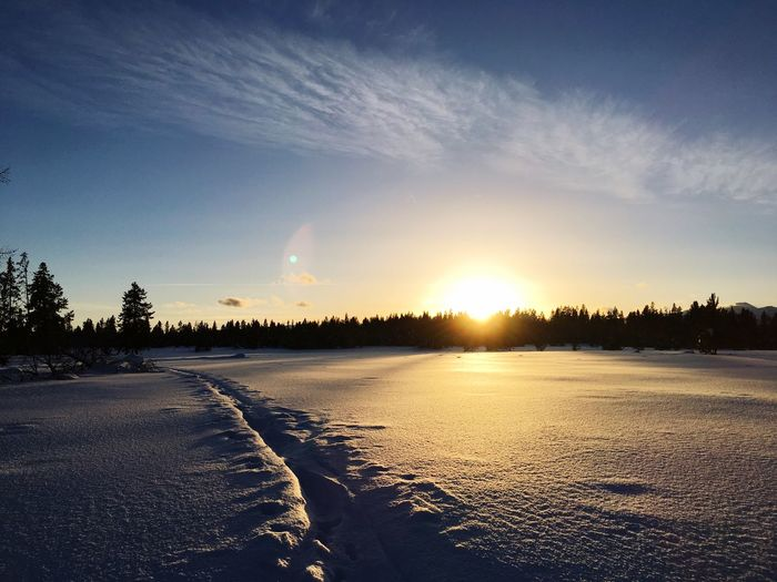 Winter Cold Temperature Snow Nature Sunset Beauty In Nature Tree