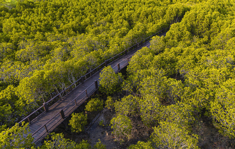 High angle view of bridge amidst trees in forest