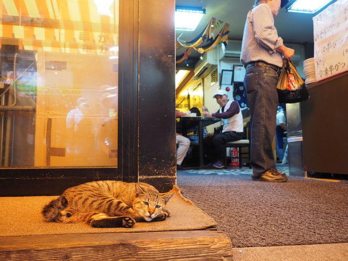 Street Photography Street Photo Cat