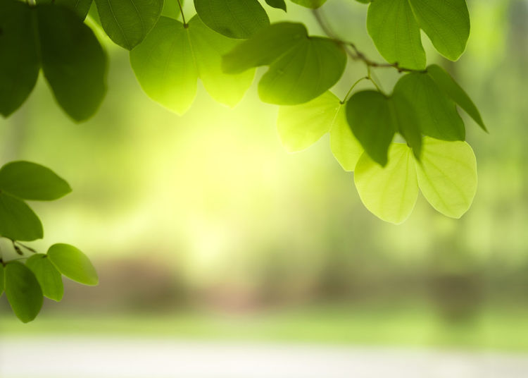 Backdrop Background Beautiful Beauty Blur Blurry Bokeh Botany Branch Bright Closeup Colorful Copy Day Design Ecology Environment Flora Foliage Forest Fresh Garden Green Greenery Growth Landscape Leaf Leaves Light Lush Morning Natural Nature Outdoor Park Pattern Plant Scenery Season  Shiny Space Spring Summer Sun Sunlight Sunny Sunshine Texture Tree Wallpaper