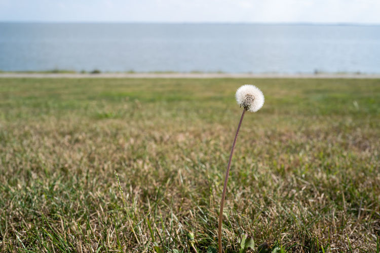 Scenic view of sea and grass on field against sky