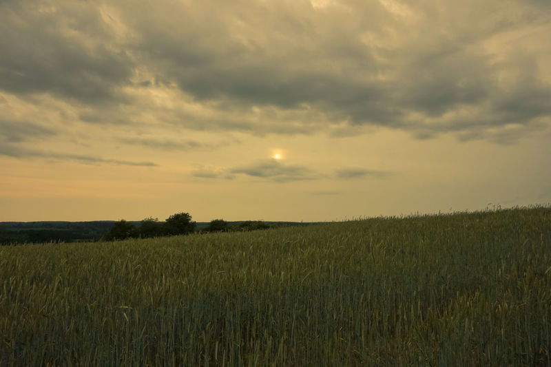 Cloudy evening at Thetford Agriculture Beauty In Nature Cereal Plant Cloud - Sky Crop  Environment Field Grass Growth Land Landscape Nature No People Outdoors Plant Rural Scene Scenics - Nature Shillouette Sky Sunset Thetford Tranquil Scene Tranquility