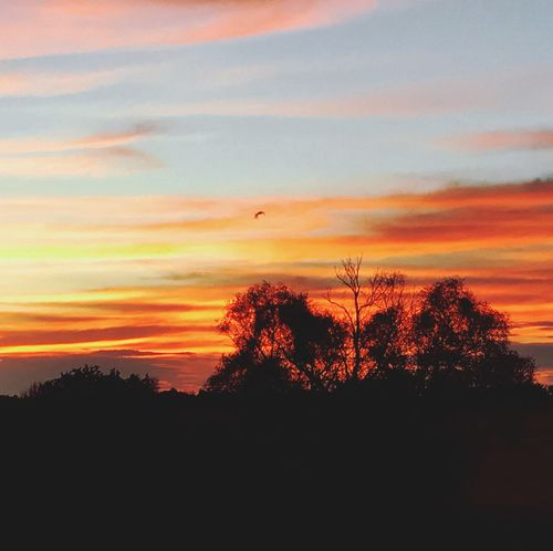 Free bird flying Sunset Tree Sky Beauty In Nature Tranquil Scene No People Outdoors