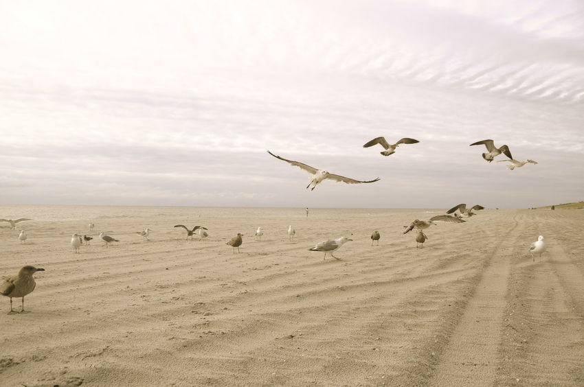 Flock Of Birds, Movement, Long Beach Island, New Jersey, Summer, Waves, Seagulls, Birds, Seascape, Tranquility, Flying, Action, Nature, Vacation Ser