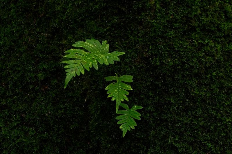 Aesthetics Nikon Beauty In Nature Close-up Day Fern Field Freshness Green Color Growth High Angle View Land Leaf Leaves Nature No People Outdoors Plant Plant Part Tranquility Tree Vulnerability