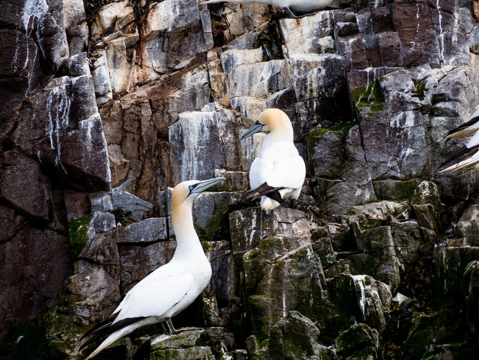 White bird perching on rock formation