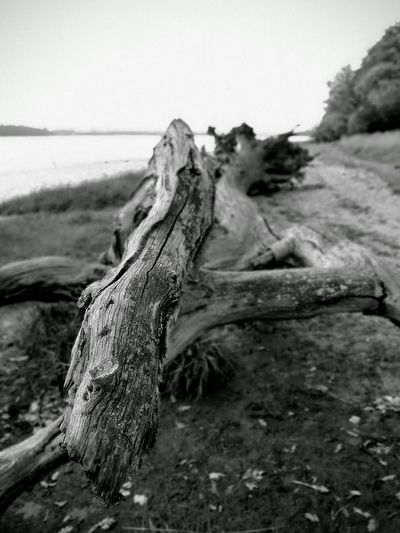 Driftwood Riverbank View Deben River, Suffolk Landscape Photography Blackandwhite Photography Textures And Surfaces No People Beach Shallow Focus