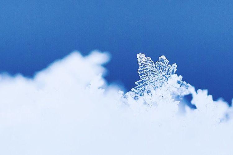 Deepfreeze Winter Snowflake