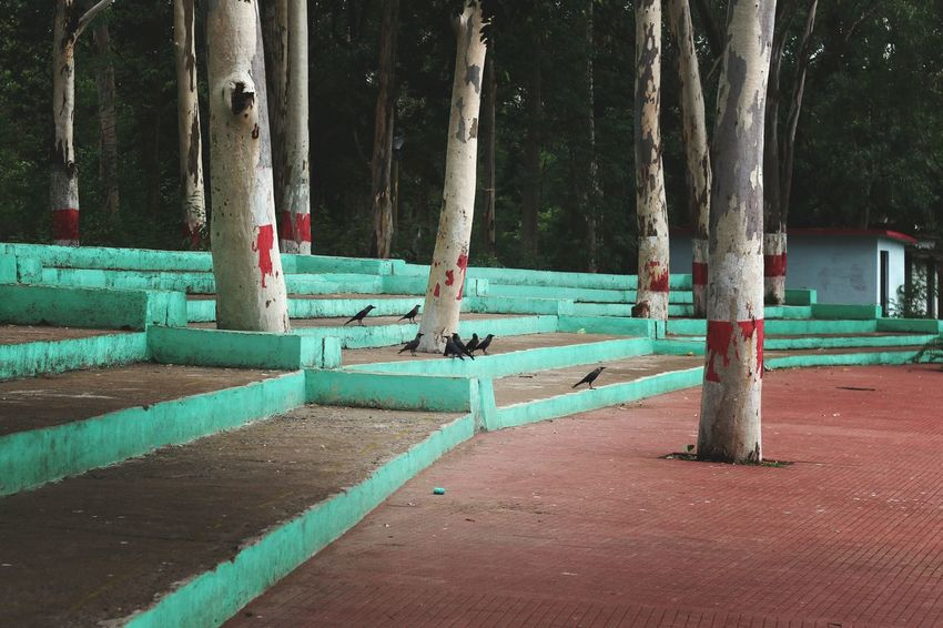Tree Tree Trunk Outdoors Day No People Nature Bhilai India Indianstories Old Paint Stairs Raven Raven - Bird Ravens