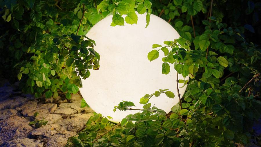 hidden light feature Magic Ball Sansibar Zanzibar Mysical Mystique Mystisch Sony RX100 V Vine Wishing Wünsch Dir Was! Zauberhaft Zauberkugel