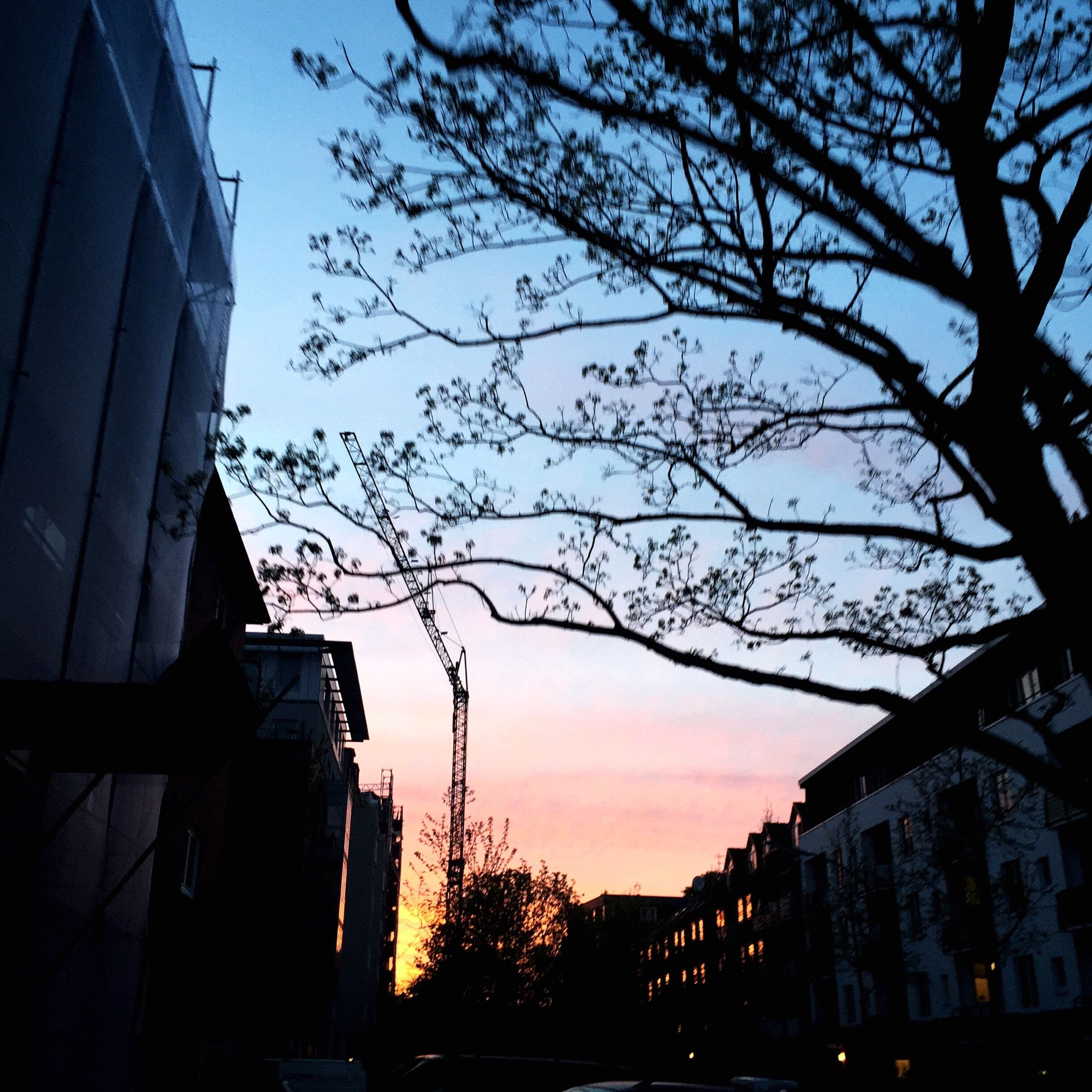 building exterior, architecture, built structure, silhouette, sunset, low angle view, sky, tree, bare tree, city, branch, building, dusk, house, residential structure, residential building, outdoors, no people, nature, orange color