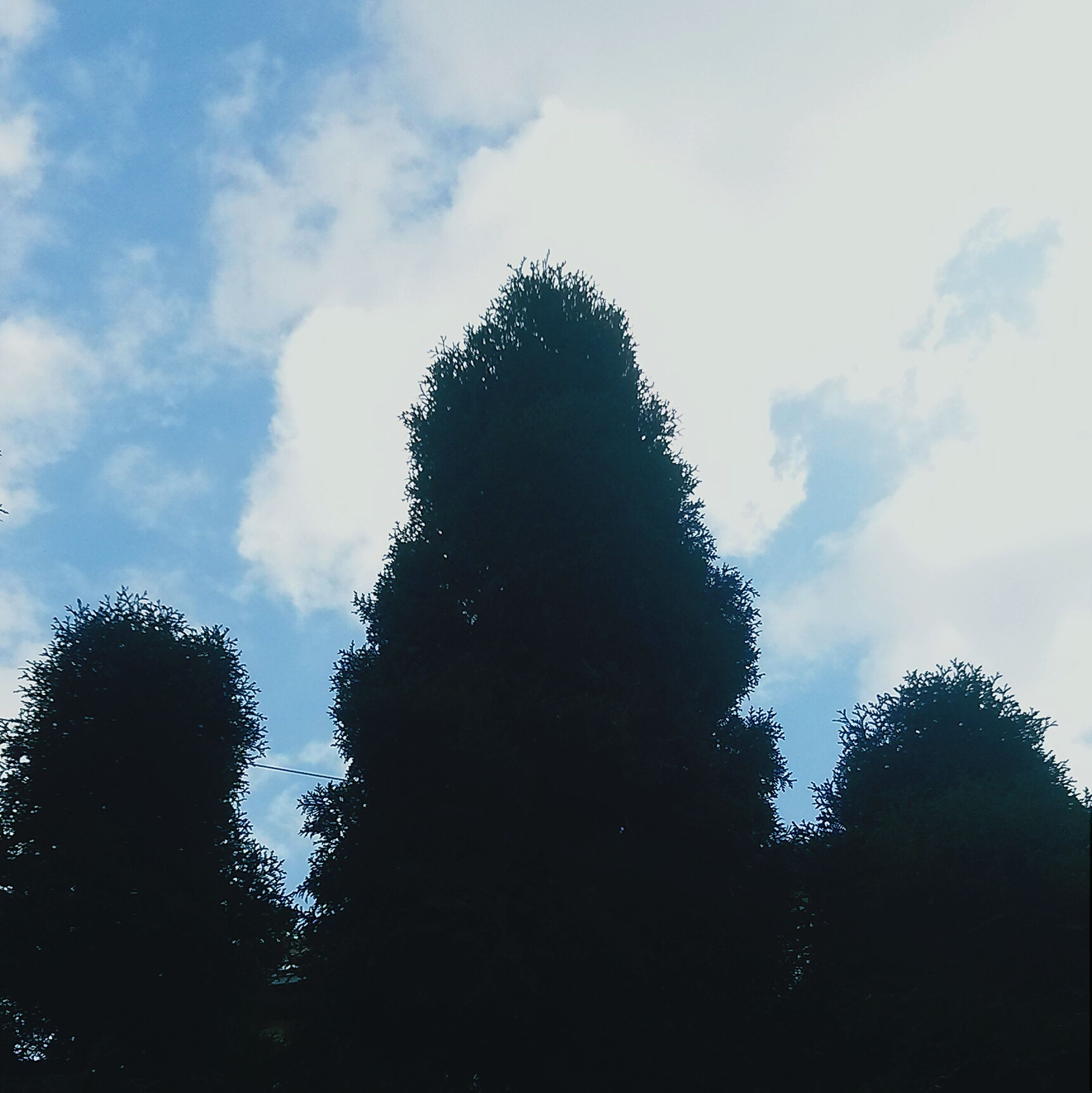 low angle view, tree, sky, silhouette, growth, cloud - sky, tranquility, nature, beauty in nature, cloud, branch, scenics, cloudy, tranquil scene, outdoors, no people, day, high section, treetop, tree trunk