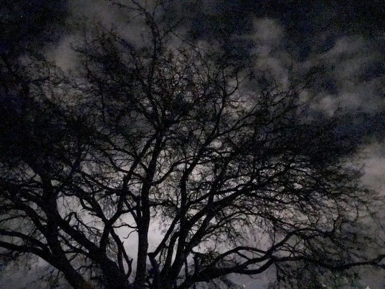 Tree Plant Branch Sky Low Angle View Beauty In Nature Bare Tree Silhouette No People Night Outdoors Nature