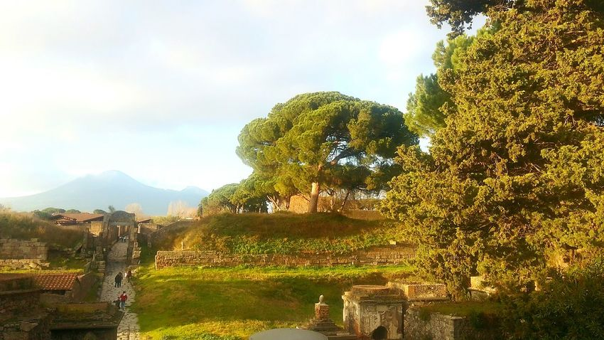 Travel Destinations Travel Tree Green Color Cloud - Sky Nature Place Of Worship Ancient Civilization Outdoors Sky Pompeii Ruins Pompeiruins Pompeii  Ruins Architecture Roman Architecture Archeology ArcheologicSite Archeologicalsite Archeological Site Archeological Archeological Complex Vesuvio Archeological Treasure Archeologymuseum Archeologie