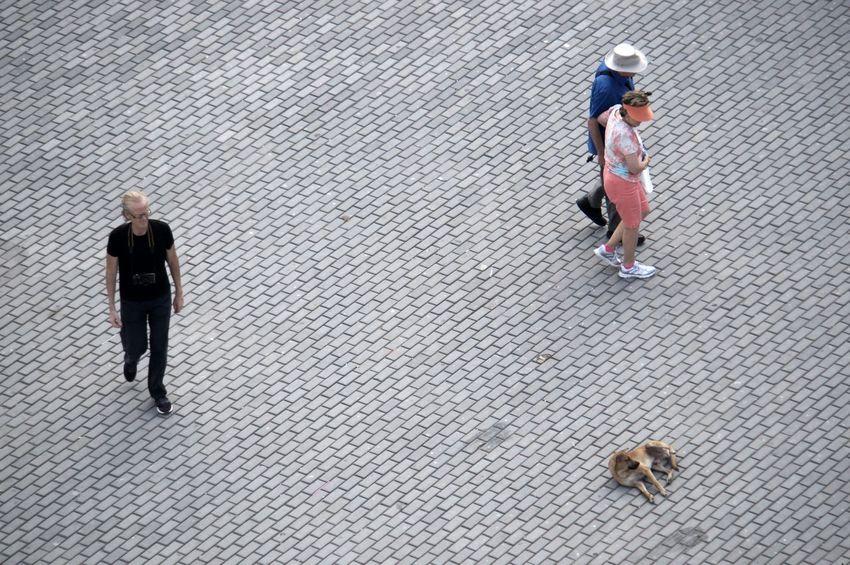 Break The Mold Cuba Cuba Collection Cuban Life Day Dog Dog Sleeping  Dogs Of EyeEm EyeEm Best Shots EyeEm Gallery Havana High Angle View Lines Lines And Angles Outdoors People Shades Of Grey Shadows & Lights The Street Photographer - 2017 EyeEm Awards
