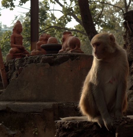 Beautiful Nature Focus On Foreground Hanuman Monkey Nature No People Taking Photos EyeEm Best Shots - Nature EyeEm Gallery EyeEm Nature Lover Eyeem Galery Indianstories India Eyeemphoto Check This Out Religion Animals Wildlife & Nature Wildlife India Wildlife_shots