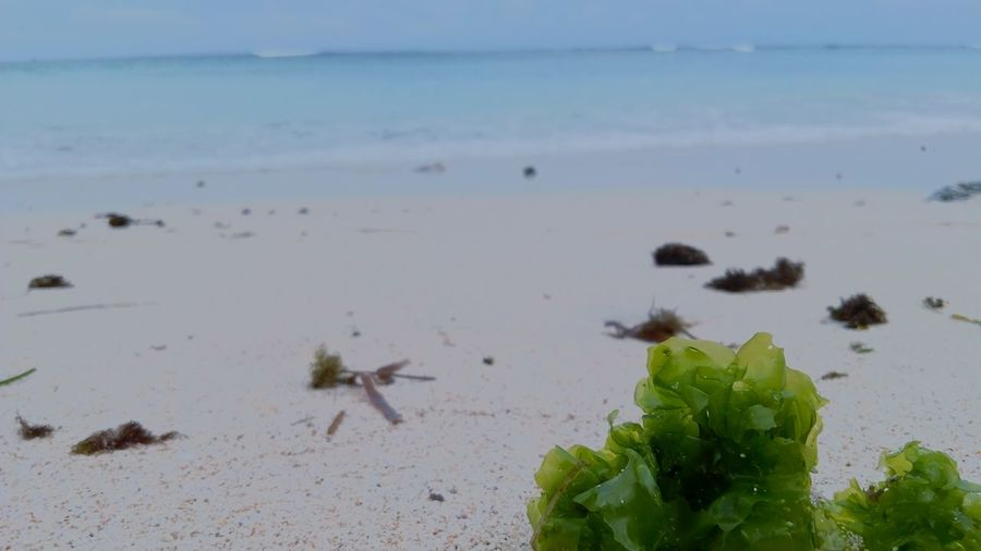Beach Sea Sand Nature Growth Beauty In Nature Day Outdoors No People Tranquility Water Multi Colored Flora Seawed Silent