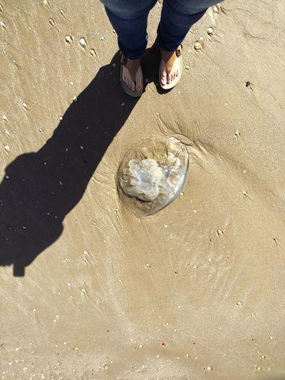 מייים מייאייפון10 IPhoneX ShotOnIphone Low Section Human Leg Real People Beach Sunlight Standing 10