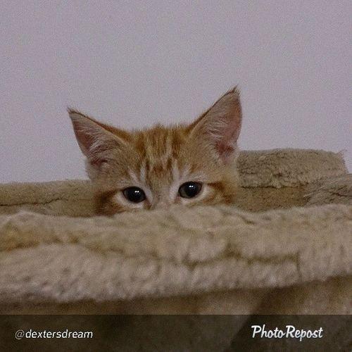 Cat Photorepost Catgoesmeow Kitten kitty cat кошастик кошарик котэ милота