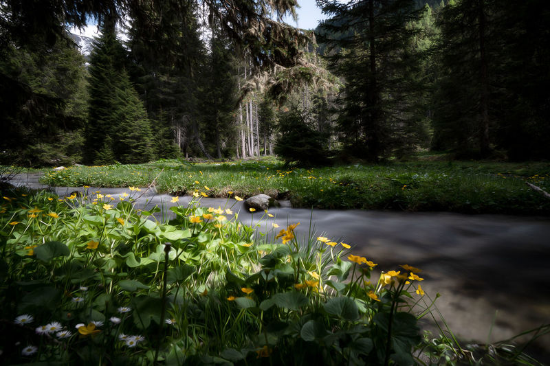 Tirol - Kühtai, ein Ort zum entspannen. Ggaßler Love ♥ Nature_collection Time To Reflect Passion Flower EyeEmNewHere Tree Flower Water Tree Area Forest Waterfall Pinaceae Idyllic Lush - Description Sky Flowing Water Water Plant Tree Trunk Water Lily Woods Long Exposure Stream