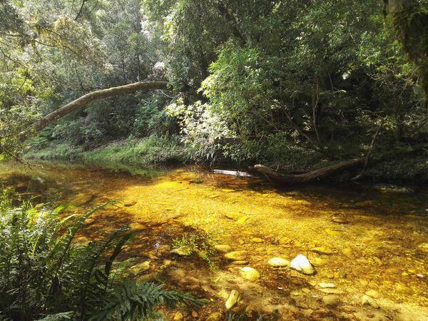 Knysna Forrest River Pebbles