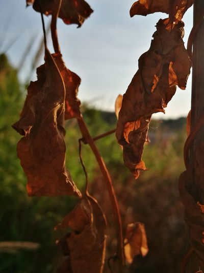 Leafs Photography Nature Details Fine Art Photography Dry Eyemphotography