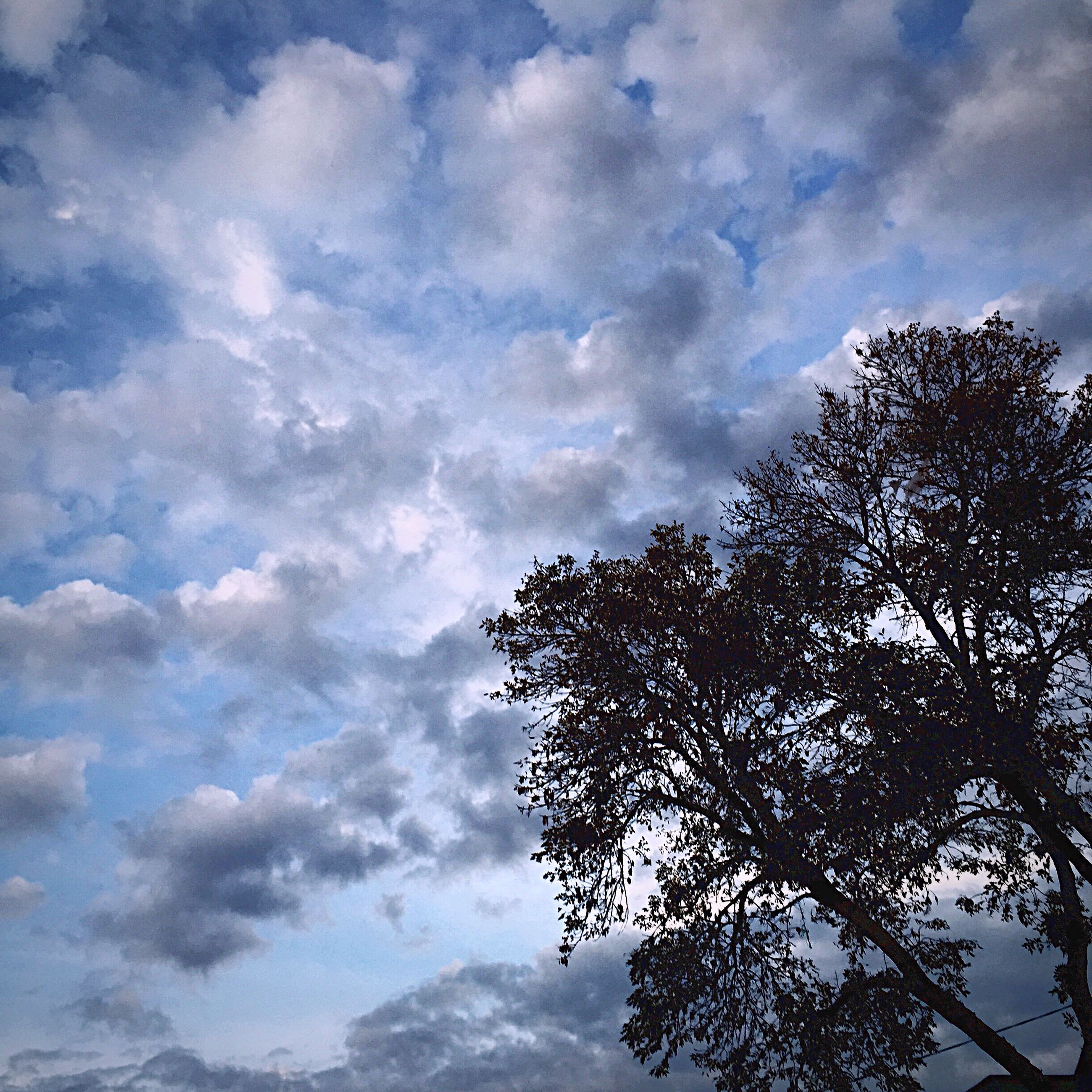 sky, low angle view, tree, cloud - sky, cloudy, tranquility, beauty in nature, nature, cloud, scenics, tranquil scene, growth, branch, day, outdoors, blue, no people, idyllic, weather, high section