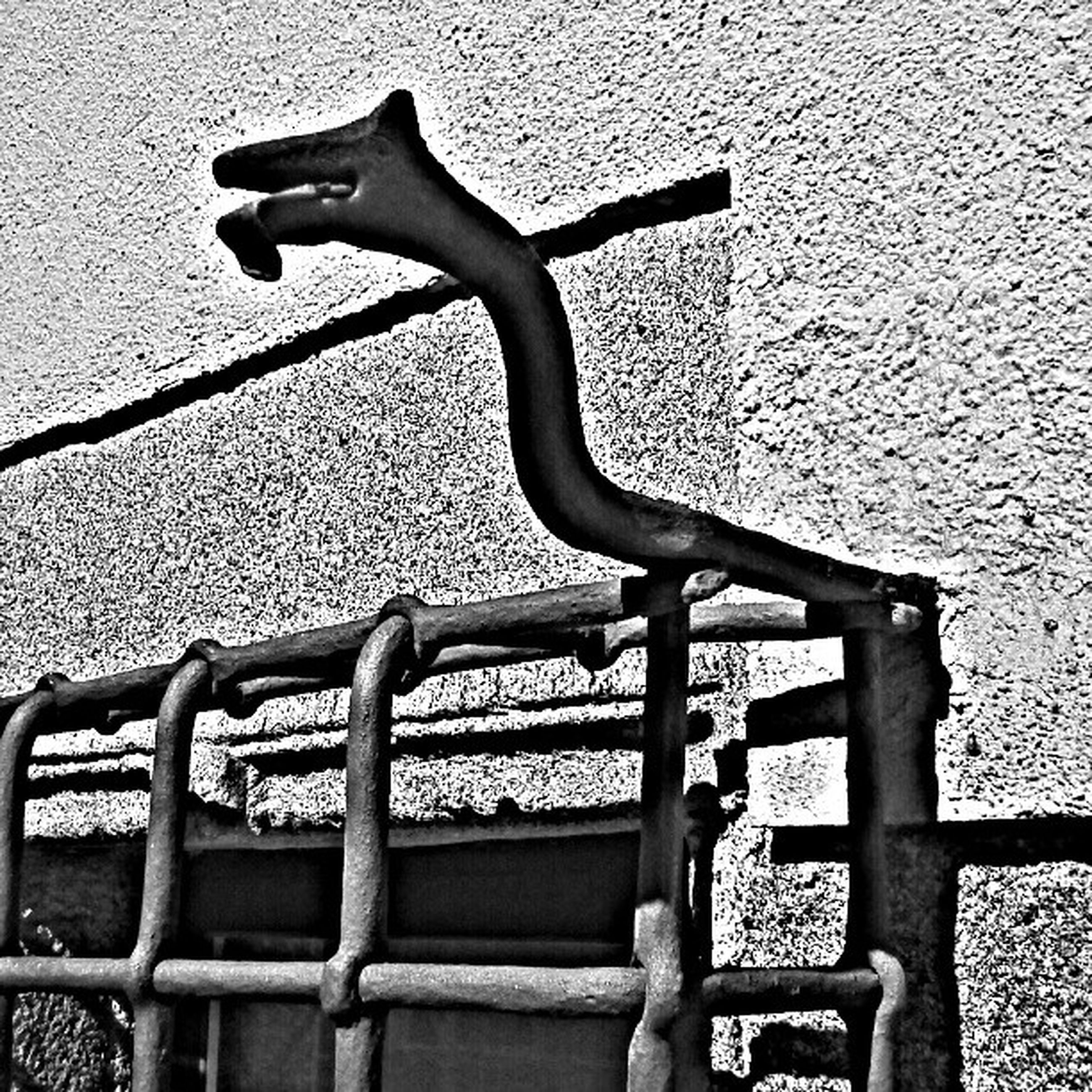 metal, railing, animal themes, built structure, bird, building exterior, architecture, brick wall, outdoors, no people, day, wall - building feature, one animal, stone wall, sunlight, fence, wall, close-up, metallic, wildlife