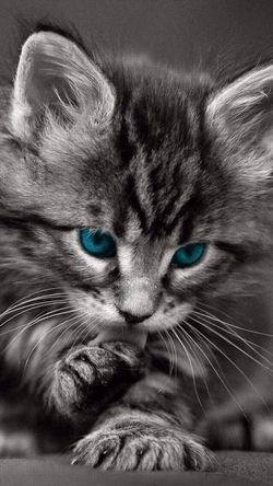 Enjoying Life _CatsILove?❤️