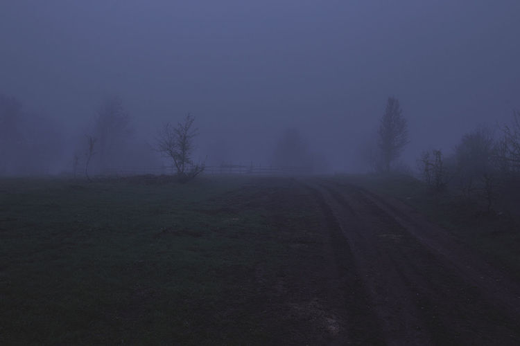 Agriculture Bare Tree Beauty In Nature Day Fog Landscape Nature No People Outdoors Rural Scene Sky Tranquility Tree