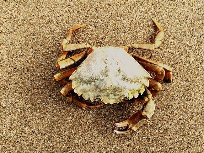 Crab Animal beach Beach Beachphotography Sand Color Palette A Bird's Eye View