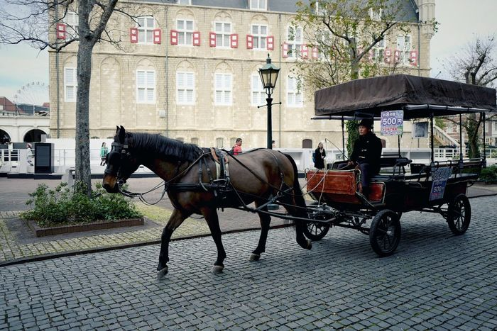 Nearly HOTEL AMSTERDAM Snapshot Street Photography Streetphoto_color Working Animal Transportation Building Exterior Mode Of Transport LEICA Q Typ116 Testing Camera Just One Shot Like a SUMMICRON 50mm F/2.0 / Walking Around Taking Pictures Themapark Amusementpark Amsterdam City Zone, HUIS TEN BOSCH Sasebo City, Nagasaki prefecture 18 December 2016 Leica Q shot No.17 なんちゃってSUMMICRON de Good Night