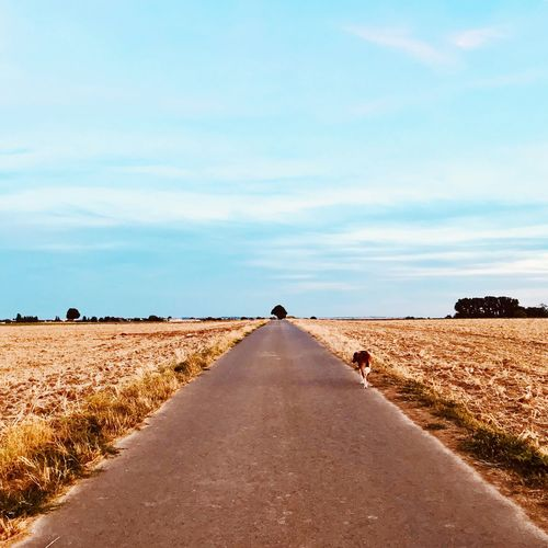 Rear view of road amidst field against sky