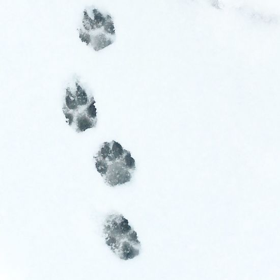 Winter No People Cold Temperature Paw Print Snowflake Outdoors Minimalistic Photography Minimalexperience Minimalmood Nature EyeEmNewHere Snow Day Animal Themes Pets Petsofeyeem