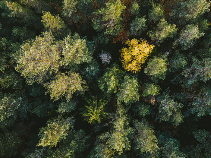 Drone  Lithuania Beauty In Nature Close-up Countryside Day Different Forest Forest Photography Full Frame Green Color Growth Mavic Mavic Pro Nature No People Outdoors Yellow Fresh On Market 2017