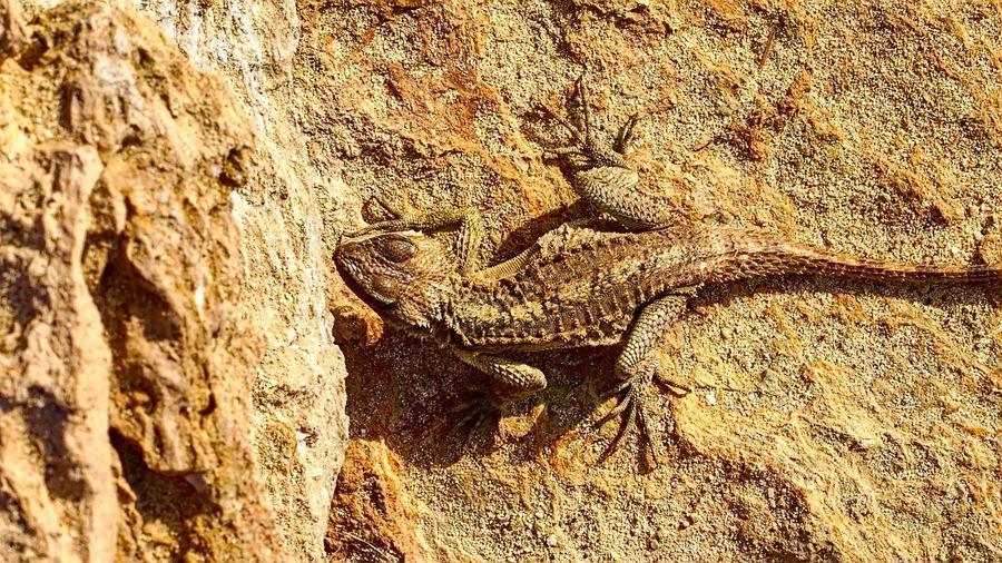 Reptile Animals
