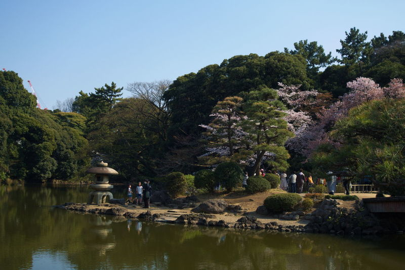 Shinjuku Gyoen National Garden. Tokyo,Japan. Beauty In Nature Clear Sky Day EyeEm Best Shots EyeEm Gallery EyeEm Nature Lover Garden Photography Growth Japan Photography Japan Scenery Japanese  Japanese Culture Japanese Garden Japanese Style Lake Nature Reflection Sakura Blossom Sakura Trees Sakura2017 Sky Tranquil Scene Tranquility Tree Water