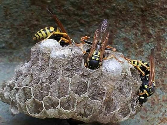 Insects  Nests