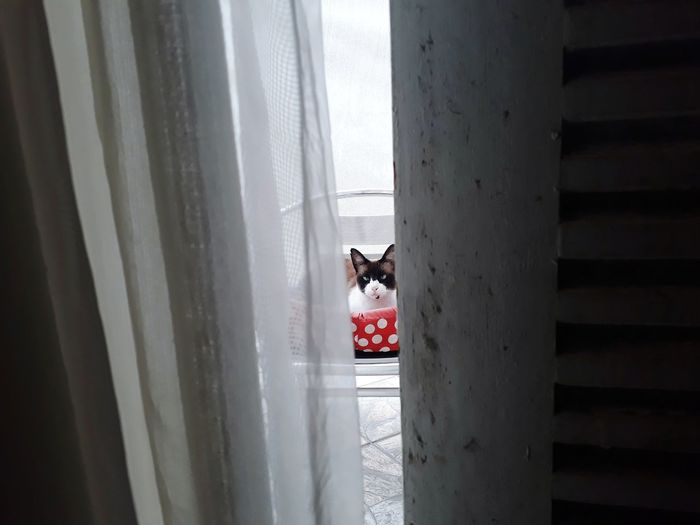 Dog seen through window at home