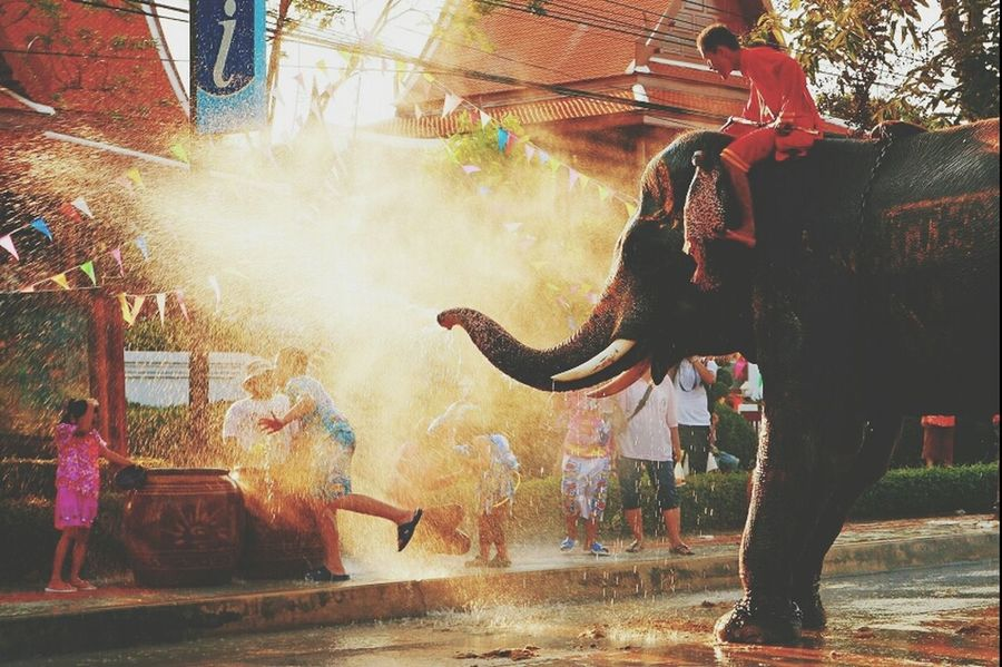 My Country Cute Elephant Kids this is Thailand ♥