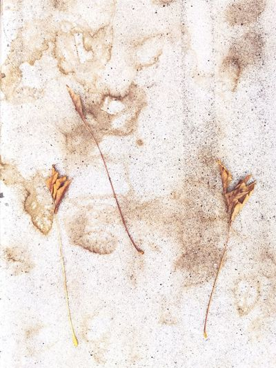 High angle view of dry leaf on wall