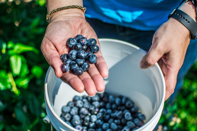 Midsection of person holding bucket with blueberries