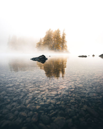 Simplicity Water Waterfront Nature Lake No People Fog Reflection Beauty In Nature Sky Scenics - Nature Tranquility Tranquil Scene Swimming Outdoors Surface Level Simplicity Simple Backgrounds Tree Larches Foggy Morning Autumn Fall Serenity