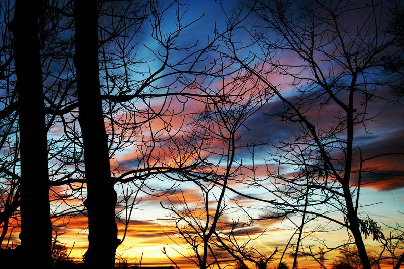 Dezember Autumn 2015 The Places I've Been Today Clouds And Sky TreePorn Hugging A Tree Skyporn Tree_collection  Sundown...♥ Peaceful Evening Walking Around Shadowland Sunset Silhouettes