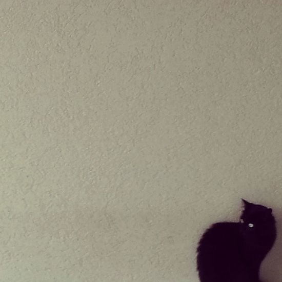 Cat BLackCat