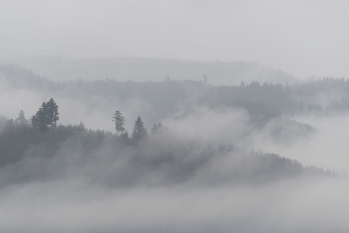 Beauty In Nature Day Fog Forest Gengenbach Landscape Langeweile Mountain Nature No People Outdoors Scenery Scenic Scenics Schwarzwald Silhouette Snow Spooky Tree Tristesse Weather