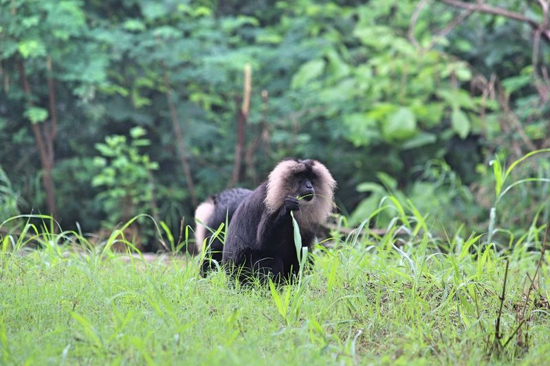 Baboon time!! Baboon Animal Animals In The Wild One Animal Plant Vertebrate Beauty In Nature Growth Outdoors Bird Day Nature Young Animal No People Land Field Grass Mammal Green Color