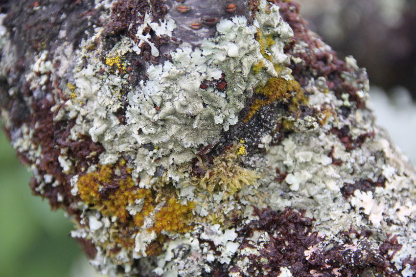 Beauty In Nature Close-up Day Focus On Foreground Freshness Lichen Nature No People Outdoors Rough Textured