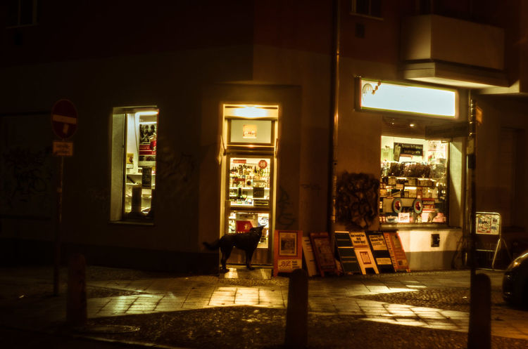 Berlin City Life Dog Exterior Night Shop Späti Store Streetphoto_bw Urban Waiting